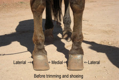 Cytek Shoes Revolution Has Your Horse Been Diagnosed
